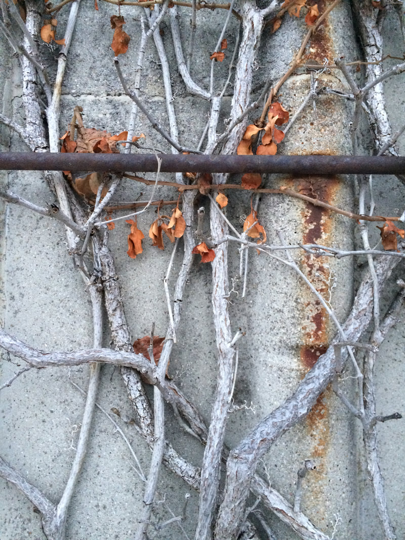DL Rigter rusty tank, silver branches artist photography